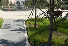 Нийслэл хот цэцэгсээр төдийгүй мододоор гоёно