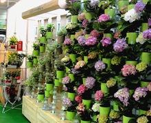 Бага зайд ургамал тарих санаанууд
