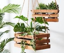 Гэртээ ургамал тарьж, ургуулах 24 Tips & Tricks.